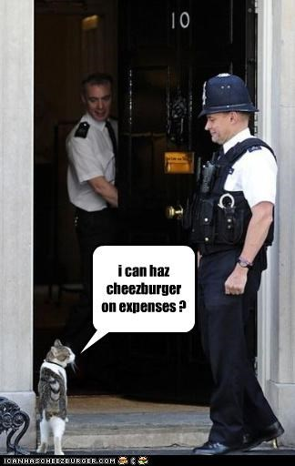 i can haz cheezburger on expenses ?