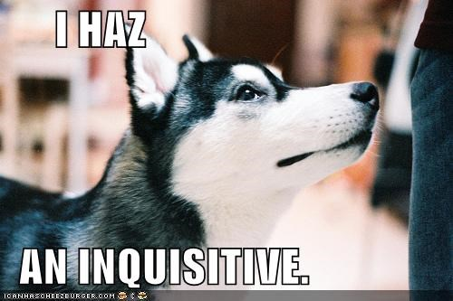 husky inquisitive question - 4921357568
