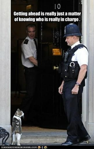 downing street cat political pictures - 4921770752