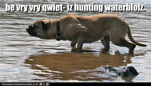 mastiff,quiet,stealth,water