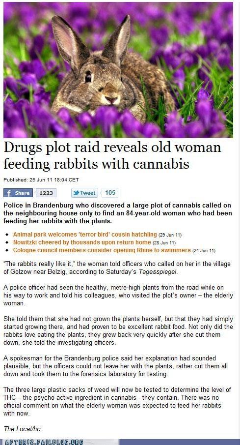 booze news,crunk critters,marijuana,rabbits,weed