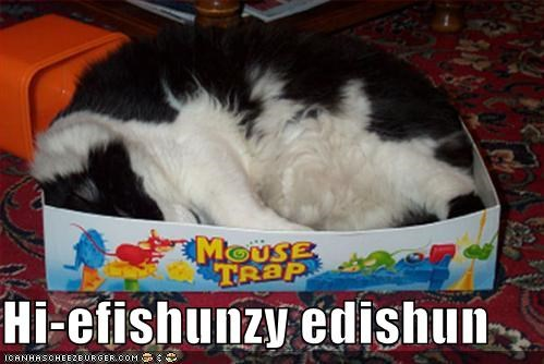 boardgames Cats lolcats mousetraps sleeping - 492227328