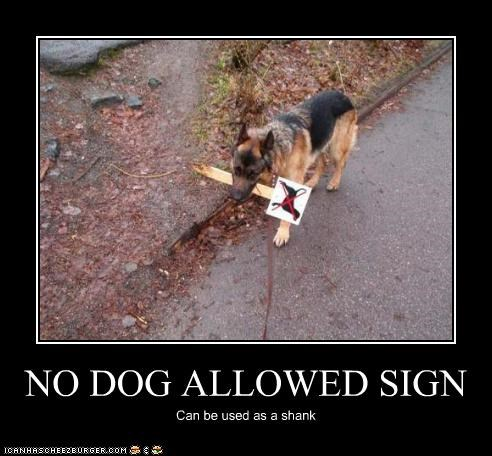 NO DOG ALLOWED SIGN Can be used as a shank
