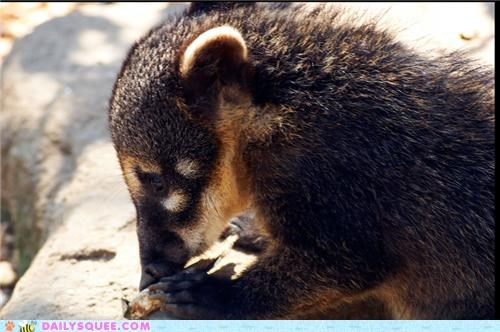 baby,coati,quiet,quiet speculation,speculation,squee spree,thinking,though