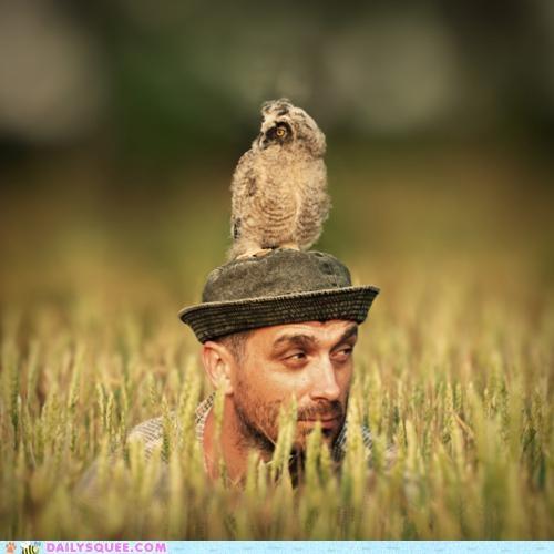 acting like animals eyes FAIL human looking mice noms observing Owl peeled prey Staring surveying watching - 4922618368