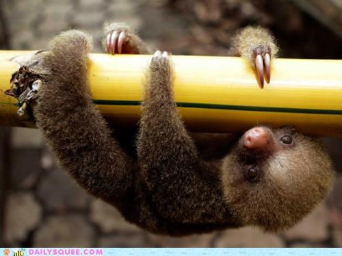 baby,bad pun,clinging,dear,hanging,life,pun,sloth