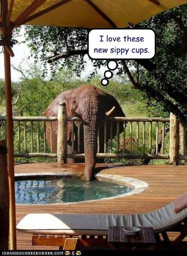 caption,captioned,cups,drinking,elephant,hot tub,love,new,sippy,water