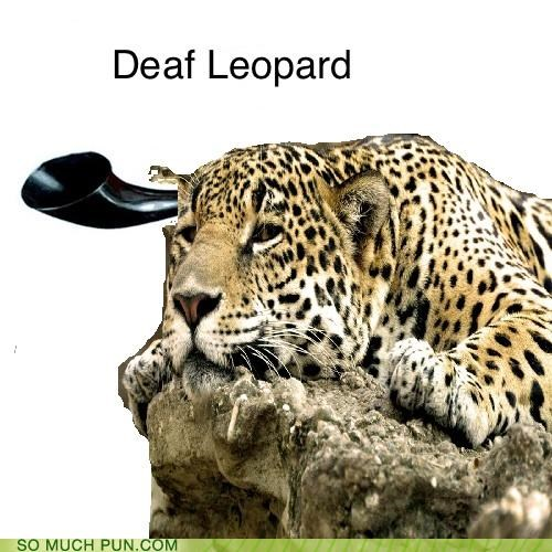 deaf Def Leppard homophone homophones leopard literalism lyrics misheard pour some sugar on me song - 4923264000