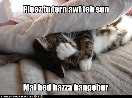 caption,captioned,cat,facepalm,hangover,hungover,please,request,sun,turn off