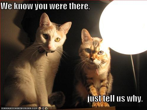 bad cop caption captioned cat Cats explanation good cop interrogation know light scene there we why - 4923644928
