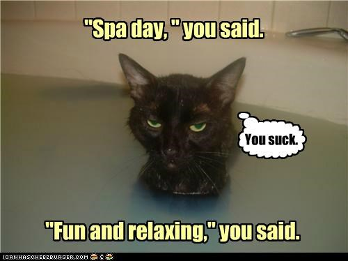 bath caption captioned cat do not want fun hearsay human lies relaxing spa spa day subjective subjectivity unhappy water - 4924719104