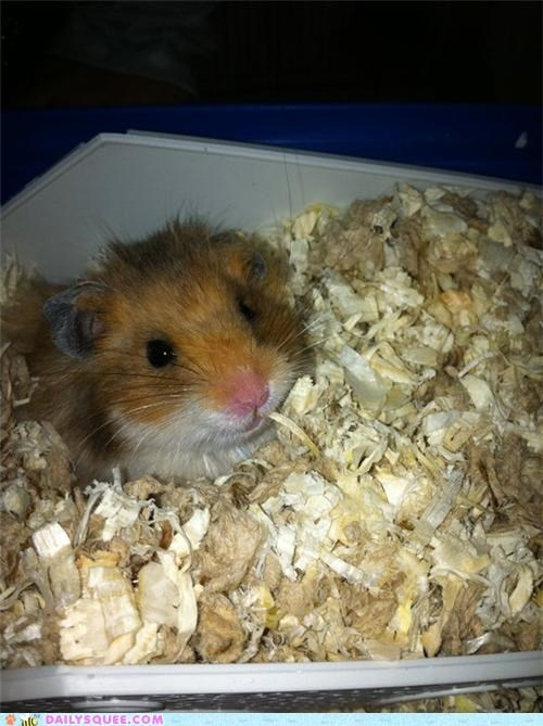 hamster,happy,posing,reader squees,smiley,smiling