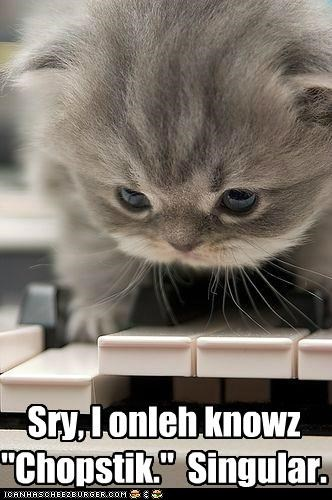 caption captioned cat chopstick kitten now only piano singular song sorry - 4924818944