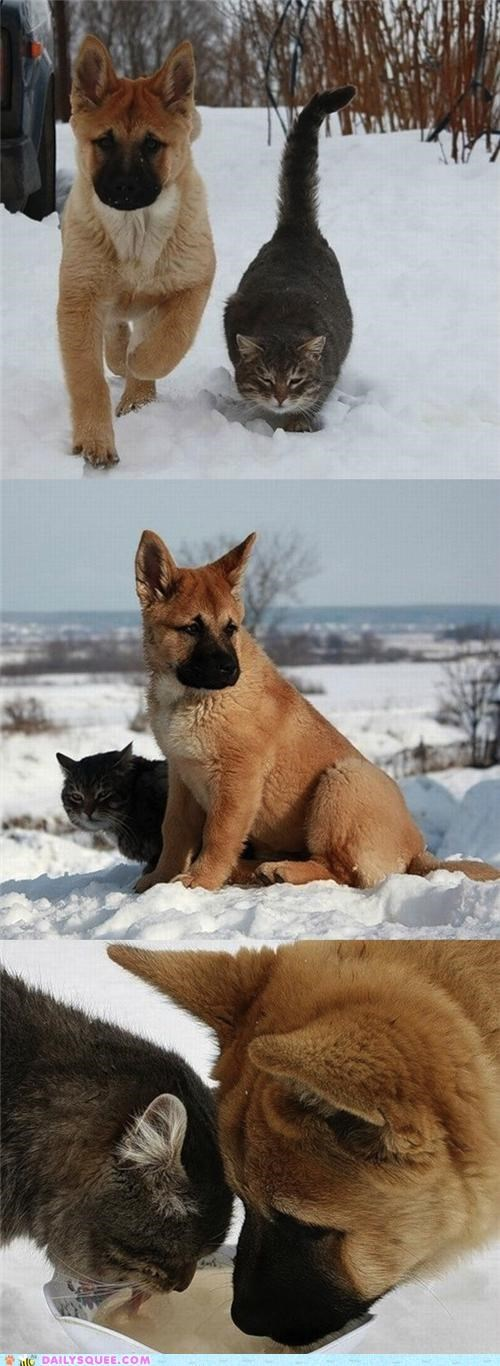 cat,dogs,friends,friendship,Hall of Fame,Interspecies Love,playing,puppy,snow,snuggling,winter