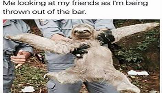 funny sloth memes about being slow and cuddly, y'know like a sloth