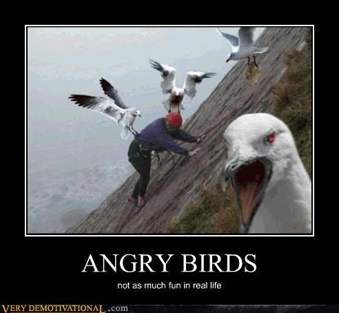 angry,birds,climbing,hilarious,video games,wtf
