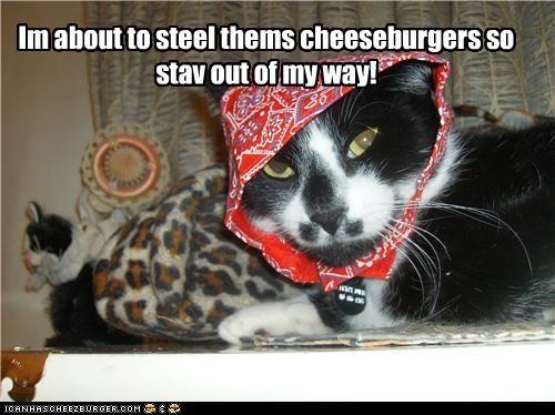 Cheezburger Image 4926074112