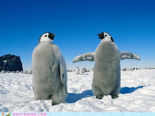 dance instruction lyrics penguin penguins Rocky Horror Picture Show song time warp - 4926315776