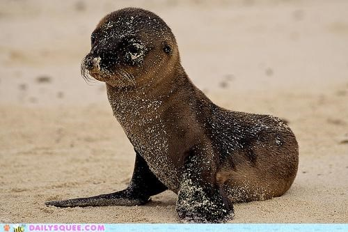 adorable,baby,bath,covered,cute,dirty,hunch,name,playful,pun,sand,sandy,sea lion