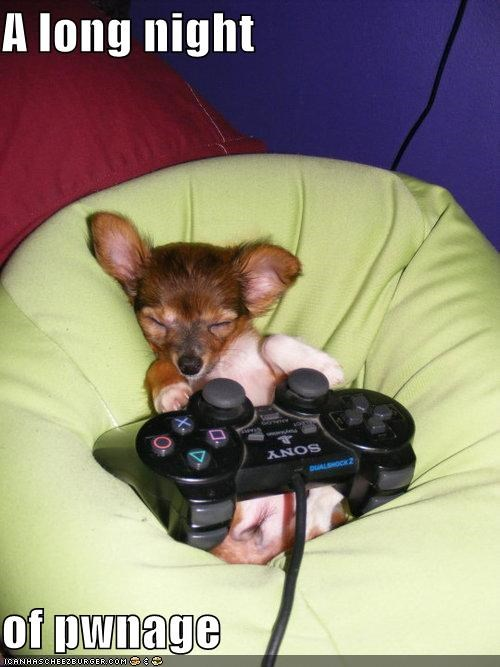 best of the week chihuaha gaming Pillow playstation 3 puppy sleeping video games - 4926631168