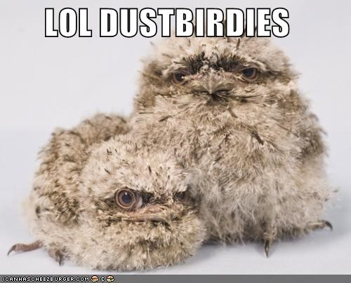 bird clean critters dust Owl