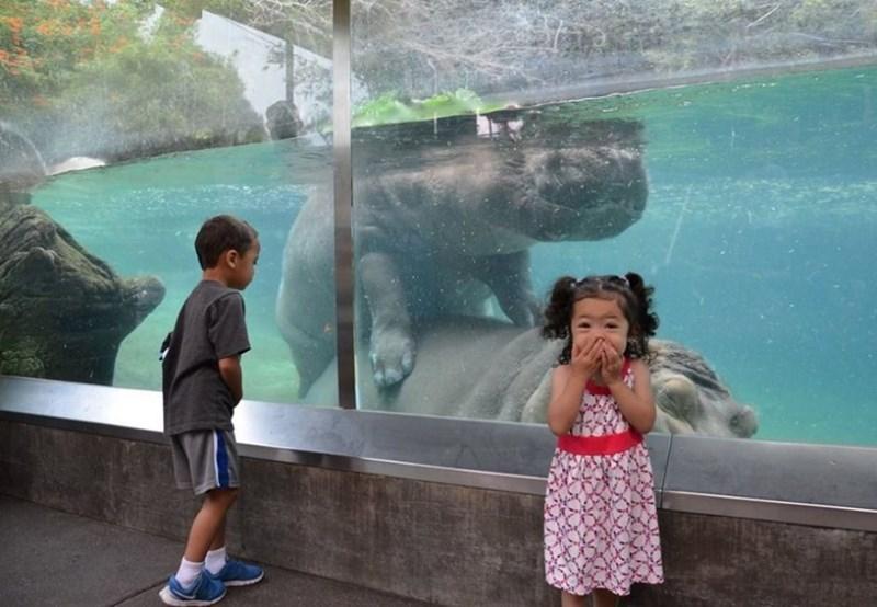 kids zoo visit animals - 4927493