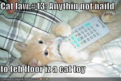 kitten lolcats lolkittehs orange remotes toys - 492804864