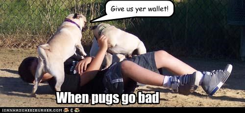 bad dog,human,outside,playing,pug,wallet