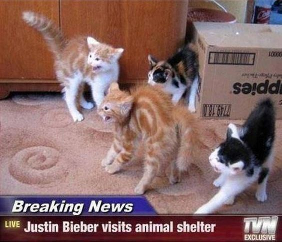 Breaking News headlines Cats - 4928261