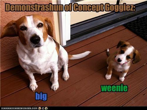 Cheezburger Image 4928299008