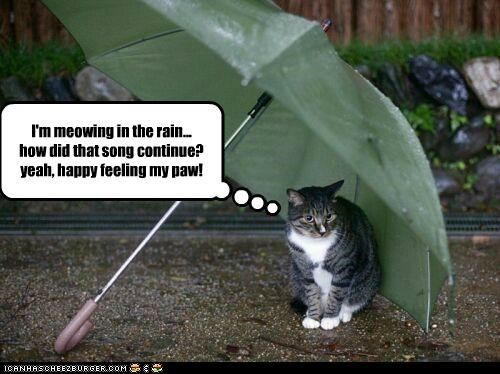 I'm meowing in the rain... how did that song continue? yeah, happy feeling my paw!