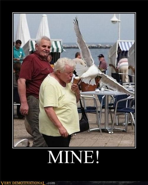 animals creepy hilarious mine old people seagull wtf