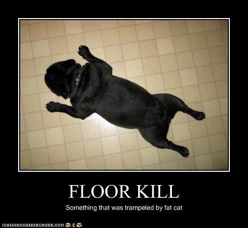 FLOOR KILL Something that was trampeled by fat cat