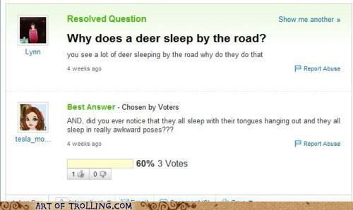 Awkward deer road kill Yahoo Answer Fails - 4929328384