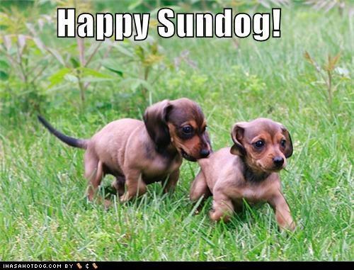beagle happy sundog mixed breed outdoors playing puppies - 4929690880