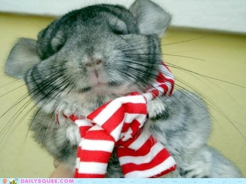 acting like animals buddha chillin-like-a-villain chilling chinchilla pun saying scarf swag