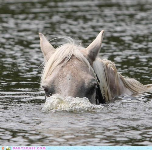 acting like animals desire dream dream come true horse peeking periscope submarine surface swimming underwater up