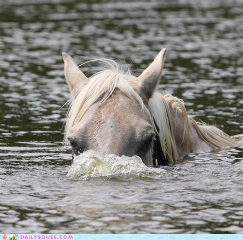 acting like animals desire dream dream come true horse peeking periscope submarine surface swimming underwater up - 4930002944