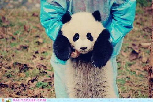 acting like animals awesome display ego egotistical medal panda proud showing off trophy - 4930013952