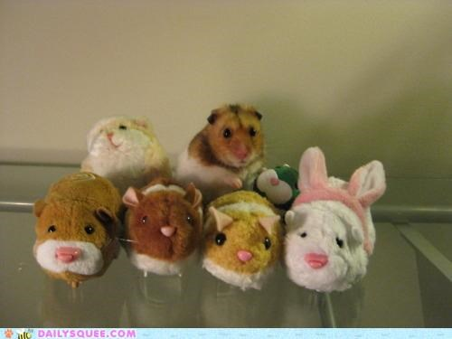 acting like animals Hall of Fame hamster hiding noms satisfied stealing stolen stuffed animals theft - 4930041600