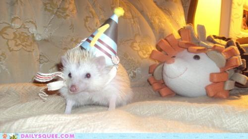best ever,best gift ever,birthday,gift,happy birthday,hat,hedgehog,Party