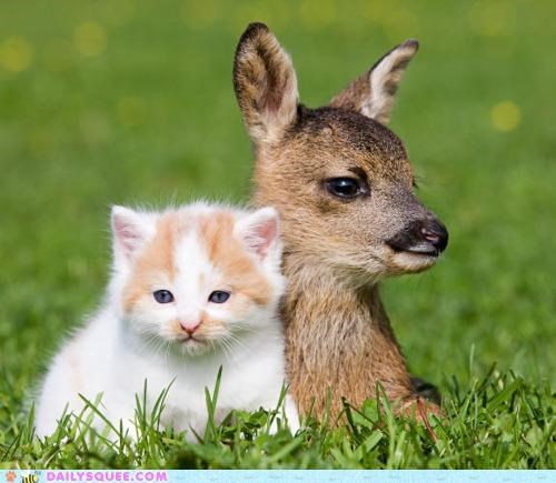 Babies,baby,cat,comparison,cuddling,eyes,fawn,Interspecies Love,kitten,question
