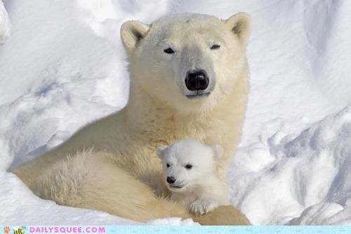 baby,bear,combination,compare,contrast,cub,cuddling,doesnt,Hall of Fame,matter,perfection,polar bear,polar bears,size