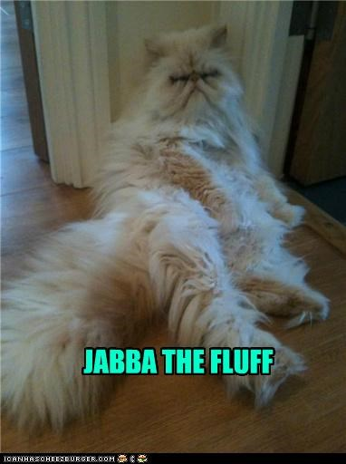 best of the week caption captioned cat fluff Hall of Fame jabba jabba the hutt pun star wars - 4930444800