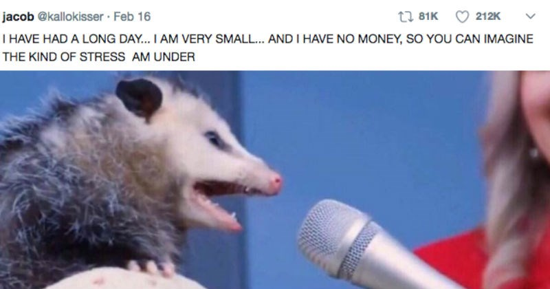 Possum giving a speech in Weekend Memes collection