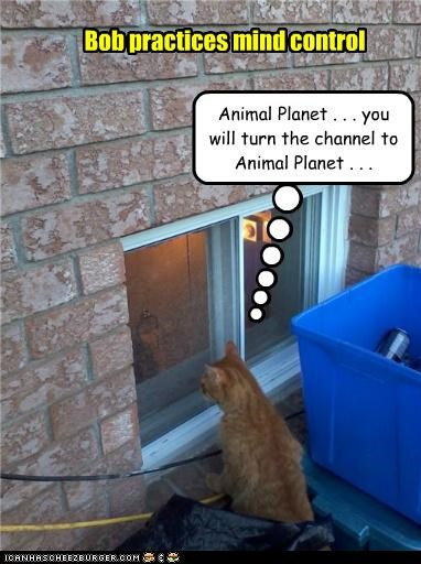 Animal Planet . . . you will turn the channel to Animal Planet . . . Bob practices mind control