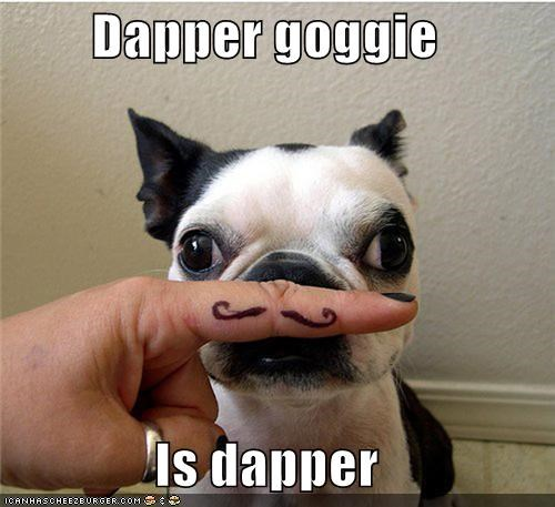 dapper goggie french bulldogs handsome looking good mustache style