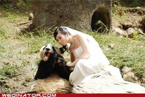 bride,China,funny wedding photos,panda