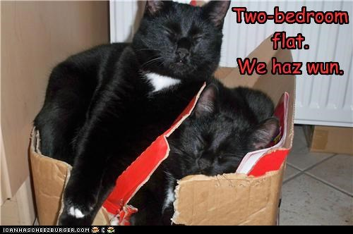 bedroom,box,caption,captioned,cat,Cats,flat,i has,sleeping,two,we