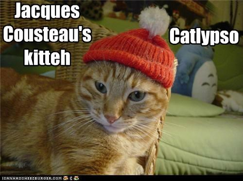 caption,captioned,cat,hat,jacques cousteau,name,style